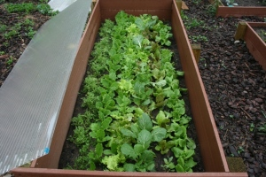 Jumpstart the growing season by creating cold frame style raised beds.